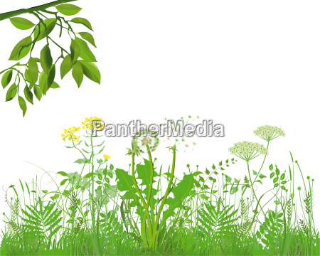 graeser mit kraeutern und blumen illustration