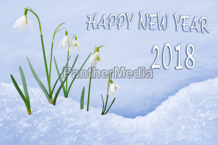new year 2018 greeting card group