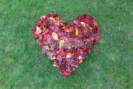 fallen leaves raked into heart shape