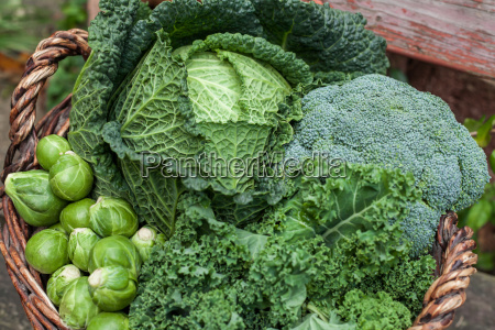 various green cabbages in basket outdoor