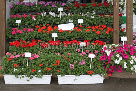 flowers nursery