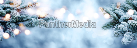 rime covered fir branches with bokeh