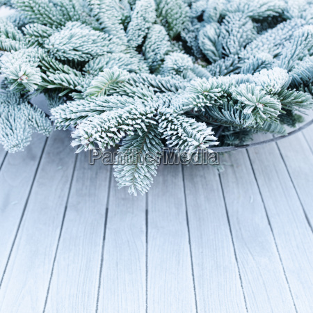 rime covered fir branches in winter