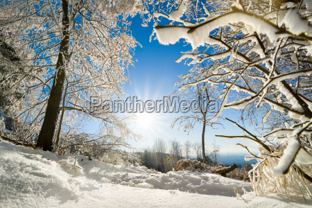 cheerful winter landscape with sun snow