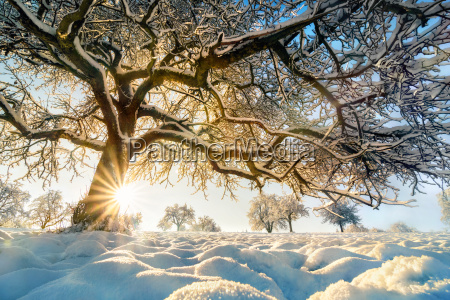 winter landscape with the sun behind