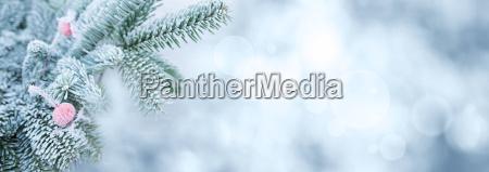 oddzialy fir w zimie z dzikiej