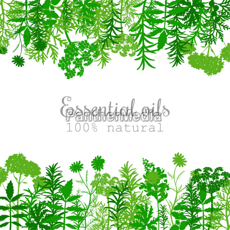popular essential oil plants label set