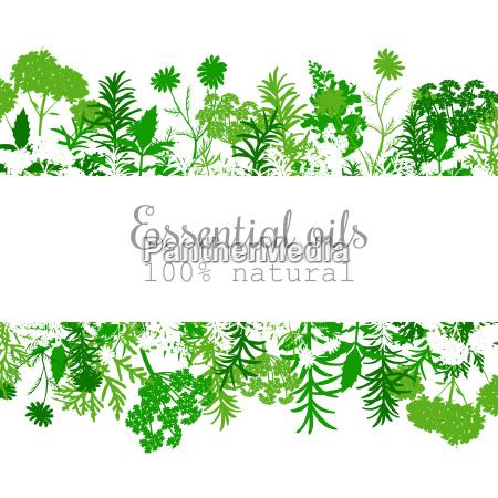 beliebtes, ätherisches, Ölanzzeichen, in, grün. - 23507320