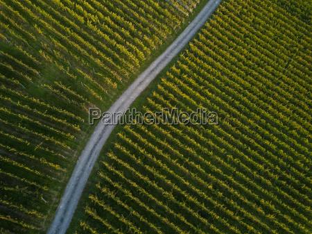 aerial view over vineyard fields in