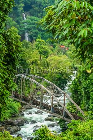 bridge in the jungle