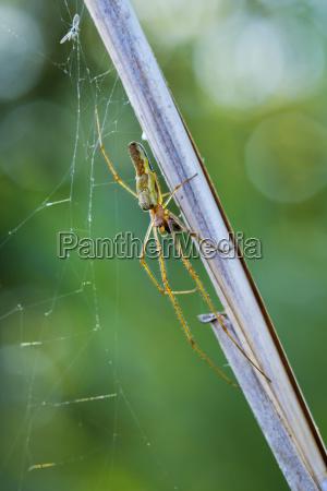 silver stretch spider und spinnennetz mit