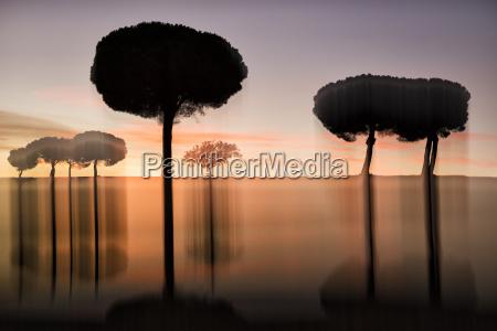 silhouettes of villafafila natural park trees