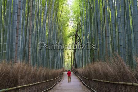 rear view of man walking along
