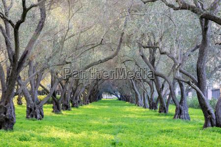 olivenhain tranquility karmelitenkloster von san francisco
