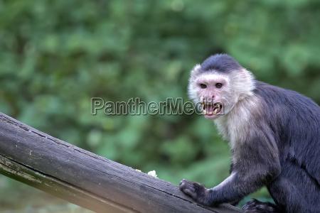 monkey in the wild a portrait