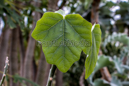 green leaf with forest in the
