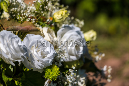 white roses on the green field