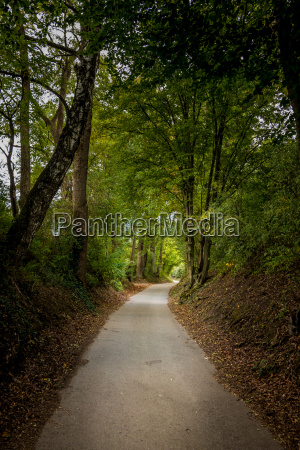 lonely path through the green and
