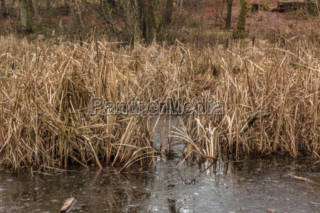 frozen dark lake dry grass and