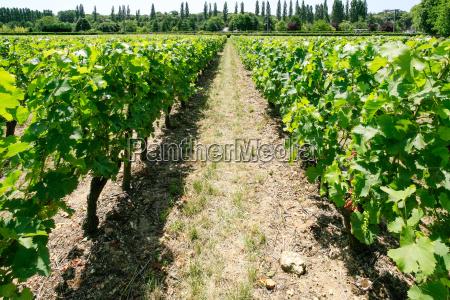 view of vineyard in val de