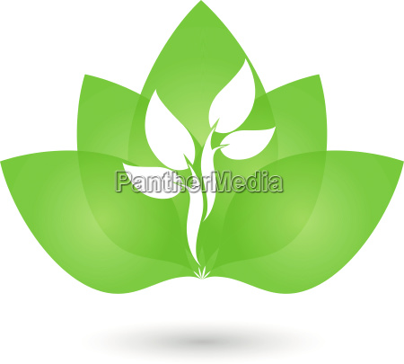 leavestreeplantnaturopathlogo