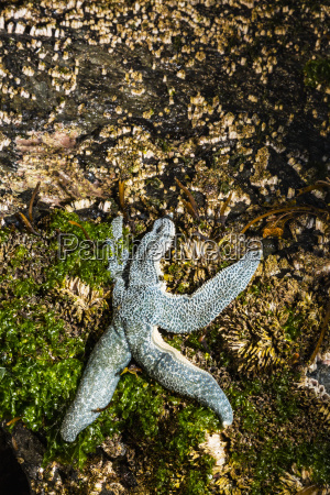 detail view of a sea star