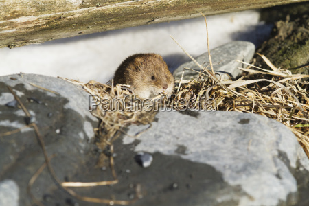 close up of shrew in south