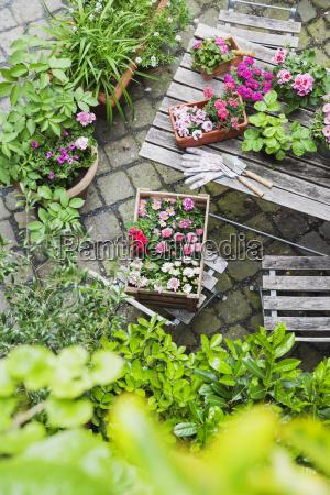 gardening planting of summer flowers