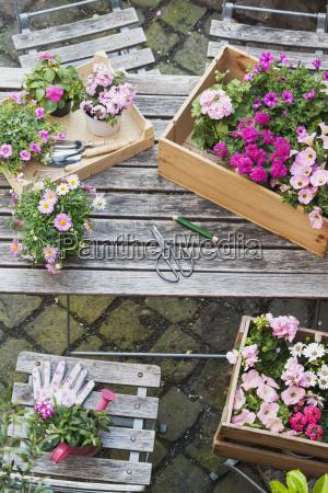 blume pflanze gewaechs rose holz bluete