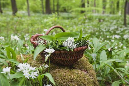 germany north rhine westphalia eifel wild