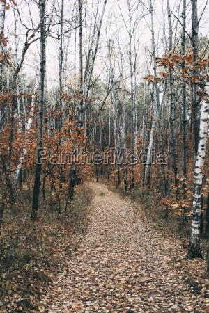 russia blagoveshchensk autumn landscape