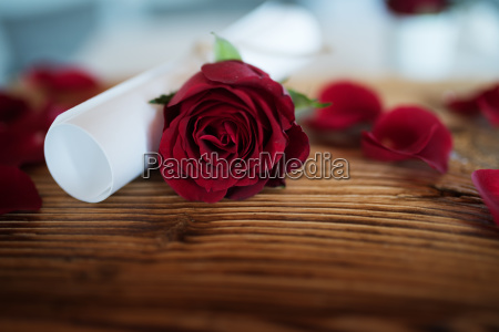 still life with red rose and