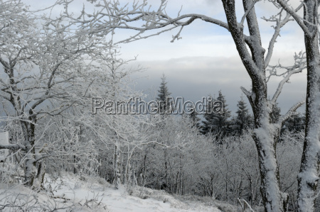 snow covered winter landscape in the