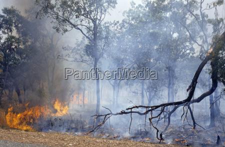 buschfeuer im litchfield nationalpark australien