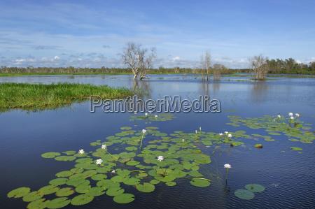 wetland in kakadu national park yello