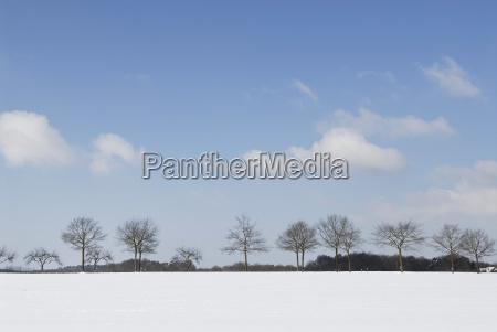 baumreihe in winterlandschaft