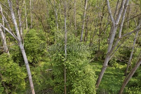 alluvial forest from abovewachauniederosterreichaustriaeurope