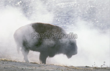 winter animal mammal national park animals