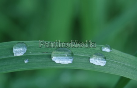 rain drops on blade of grass