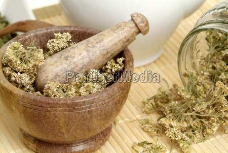 getrocknete schafgarbebluten im morser teezubereitung