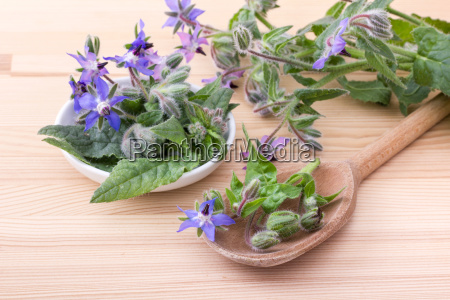 bowl and wooden spoon with borage