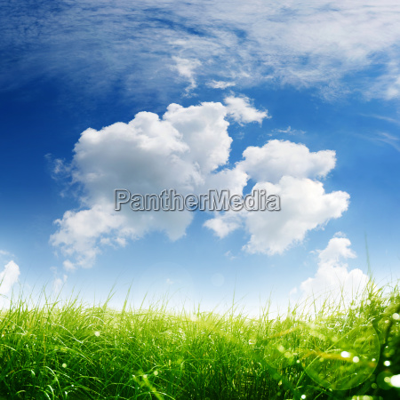 spring meadow with sky and clouds