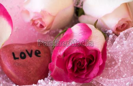 drei schoene rosen mit einen herz