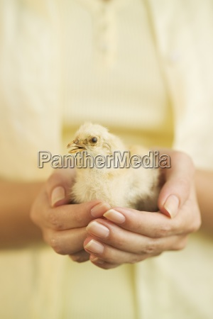woman holding a baby chick