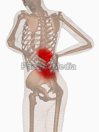 wissenschaft schmerz senkrecht vertikal ruecken schmerzen