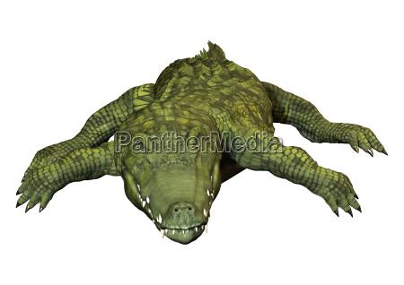 3d rendering green crocodile on white