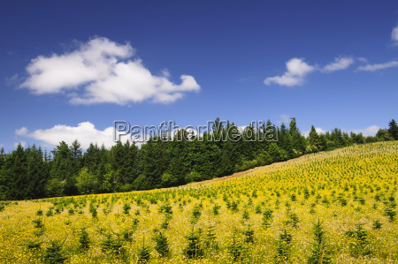usa oregon marion county hill with