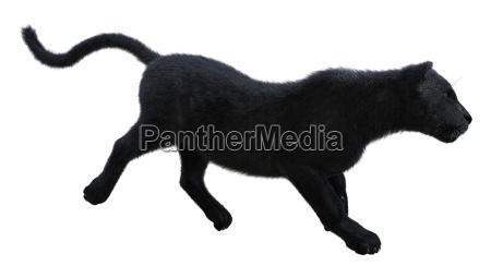 3d macht schwarzen panther auf weiss