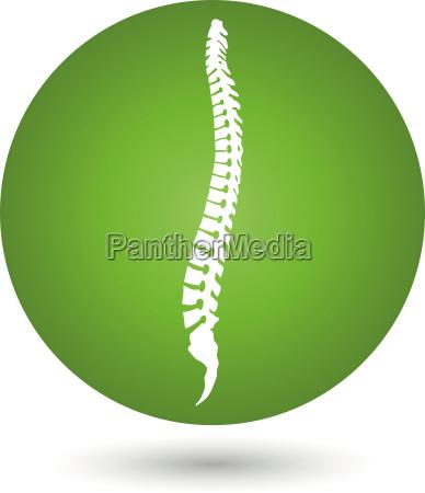wirbelsaeule ruecken orthopaedie und massage logo