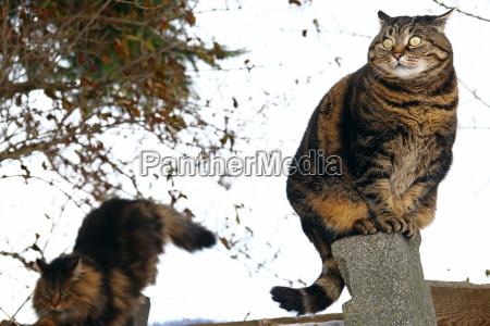 zwei katzen sind auf einen zaun